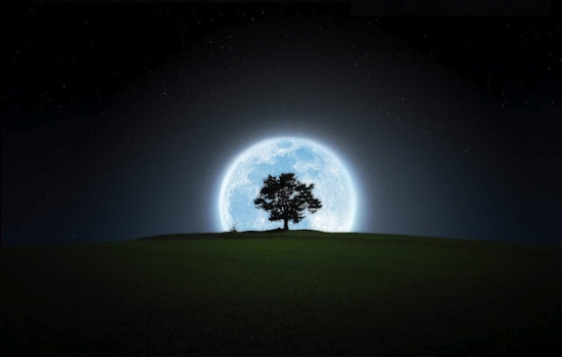 2.full-moon-and-tree-night-wallpaper-hd-desktop-photo